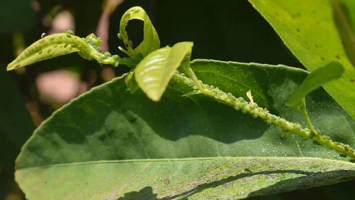 Borzalmas veszély fenyegeti a kerteket nyáron: ezzel a trükkel te is megszabadulhatsz a kártevőktől