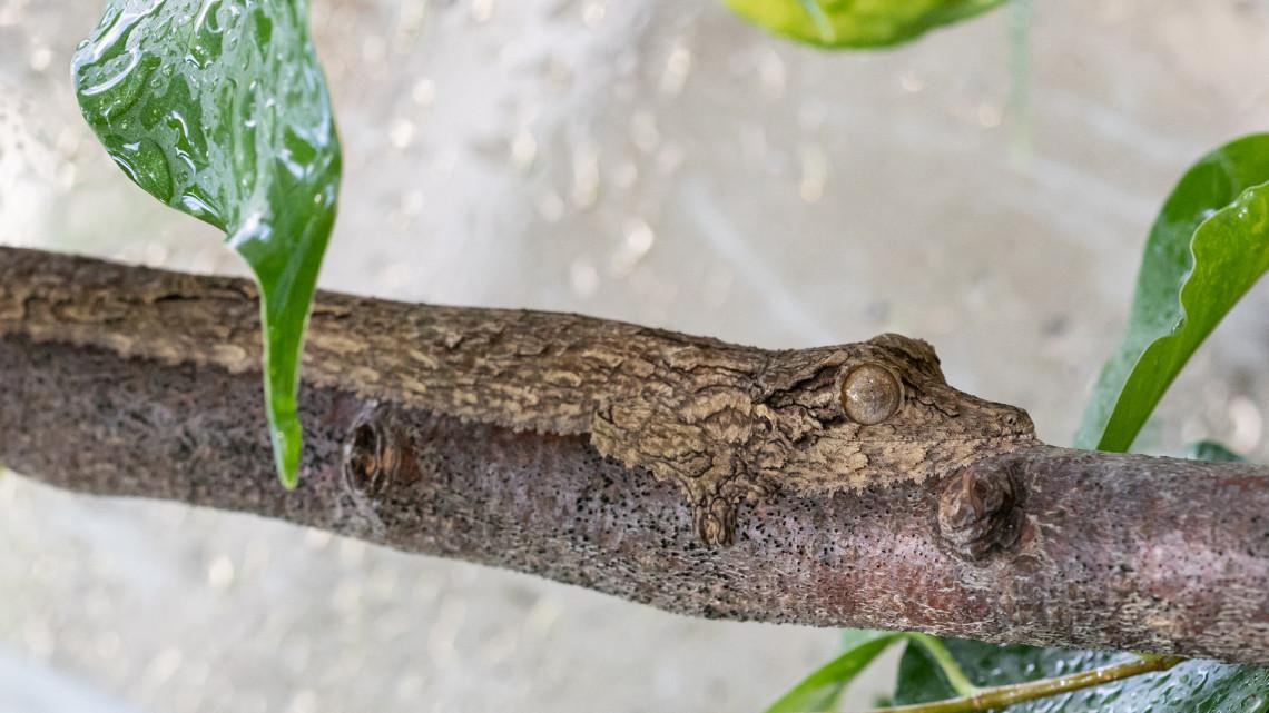 Fogadjunk, nem találod ki, mi van a fotón: ezzel az új fajjal bővült a vidéki állatkert