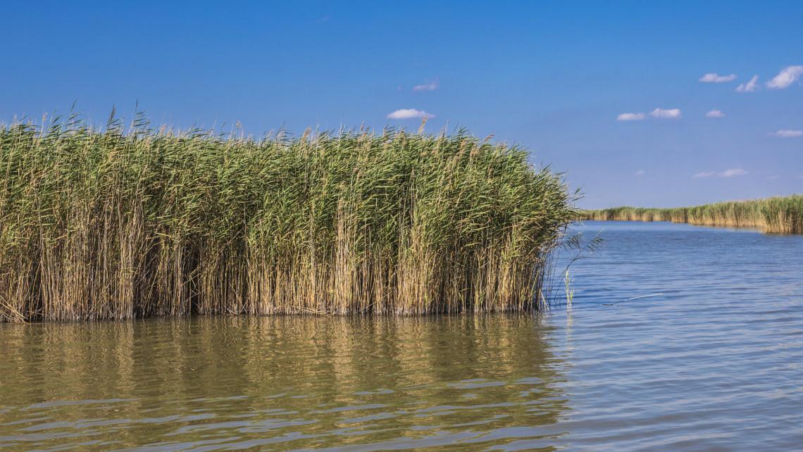 Fürdésre alkalmas a tó vize: ismét kinyithat a négy velencei-tavi strand