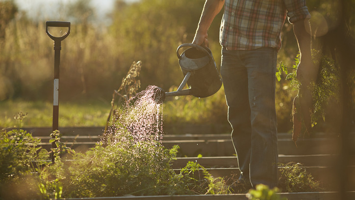 Több településen vízkorlátozás lépett életbe: ezzel a módszerrel ingyen locsolhatod a kerted
