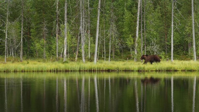 Egyre több a medveészlelés Nógrádban: ezeken a településeken bukkantak már fel