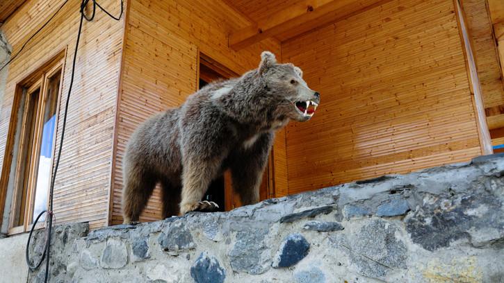 Elképesztő bűntett: illegálisan kilőtt medvéket találtak két zalai vadásznál