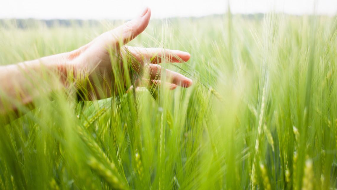 Élen járhatunk a biogazdálkodásban: környezetbarát módon is növelhető a termelés