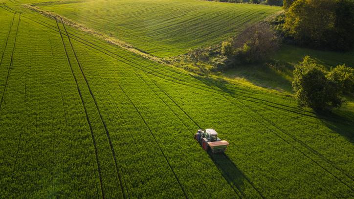 Bizakodásra adnak okot a termékbecslési adatok: az átlagoshoz közeli a várható termésmennyiség