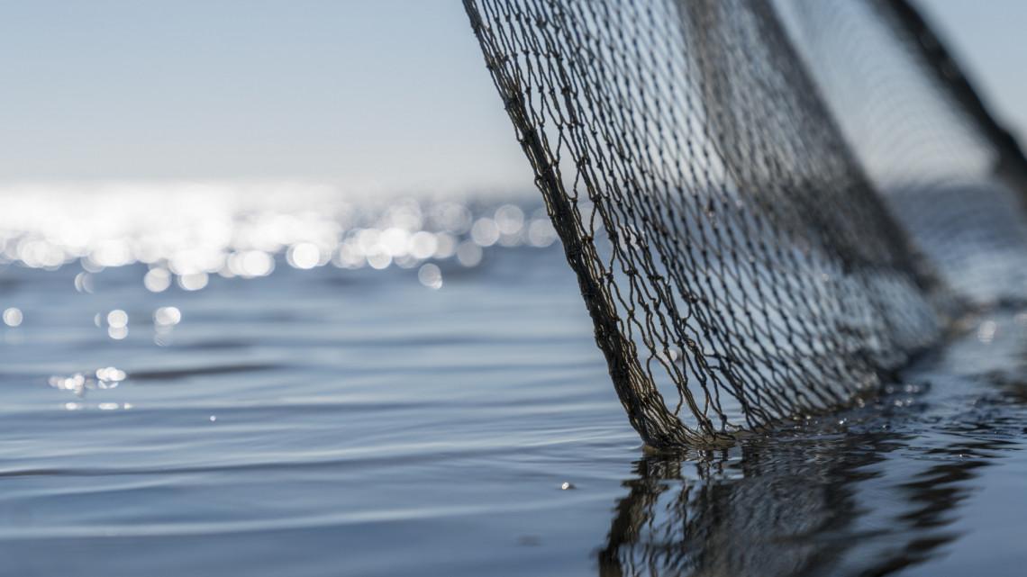 Fotókon a lehalászott gigabusák: több mint 48 mázsa inváziós hal lepte el a Tisza-tavat