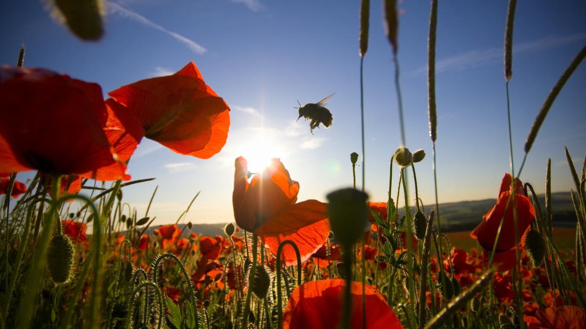 Eljött az ideje a cselekvésnek: meg kell védeni a méheket, különben végünk