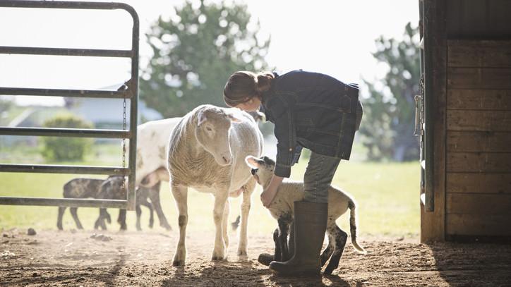 Hiába a rekordösszegű támogatás: az állattenyésztők borúsan látják az ágazat jövőjét
