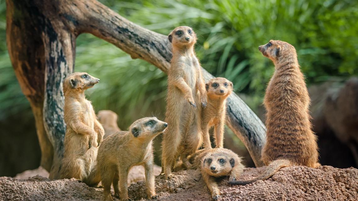 Újra korlátozások nélkül látogatható a vidéki állatkert: rengeteg a kuriózum