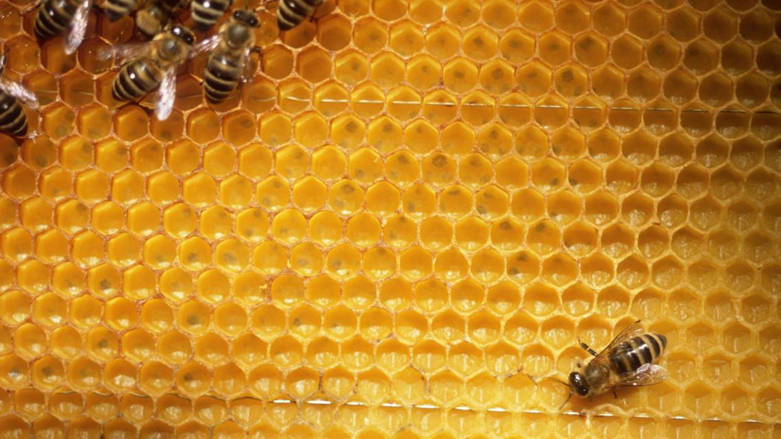 Így dolgoznak a minisztérium teraszán: Nagy István videójában a szorgos méhek