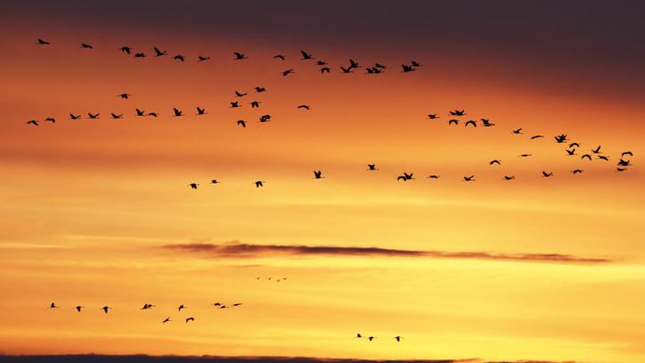 Egyre több kárt okozhatnak ezek a madarak: mi lehet a békés megoldás ellenük?