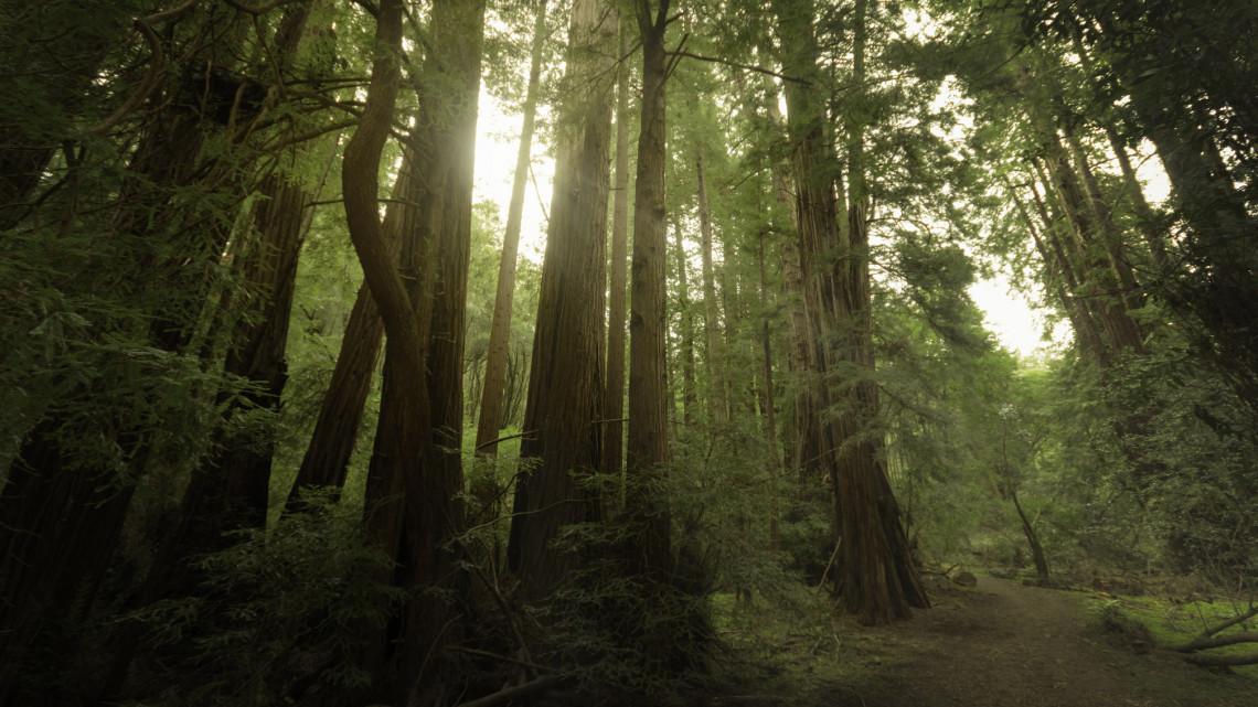 Befejeződtek a természetvédelmi munkálatok: több száz milliós fejlesztés zárult le Aggteleken