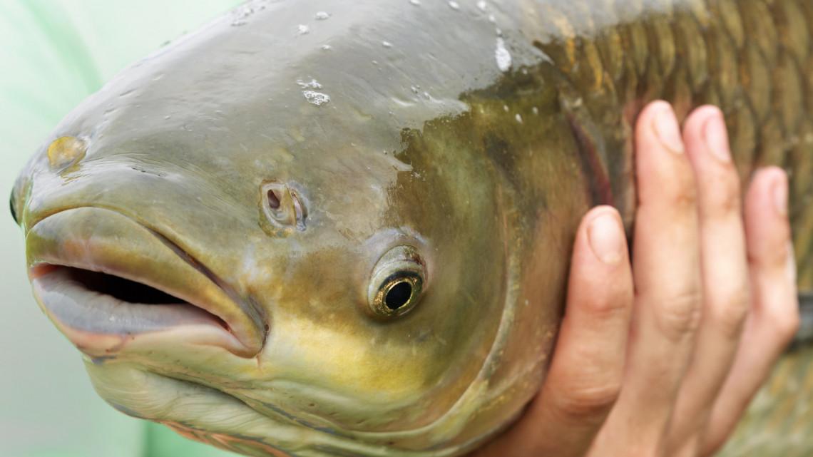 Irigyeljük a mázliját: fotón mutatjuk a hölgy horgász óriási fogását