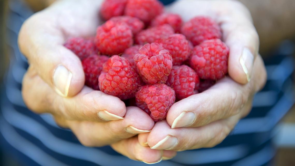 Aranyárban mérik a magyarok kedvenc nyári gyümölcsét: itt fillérekért megkaphatod