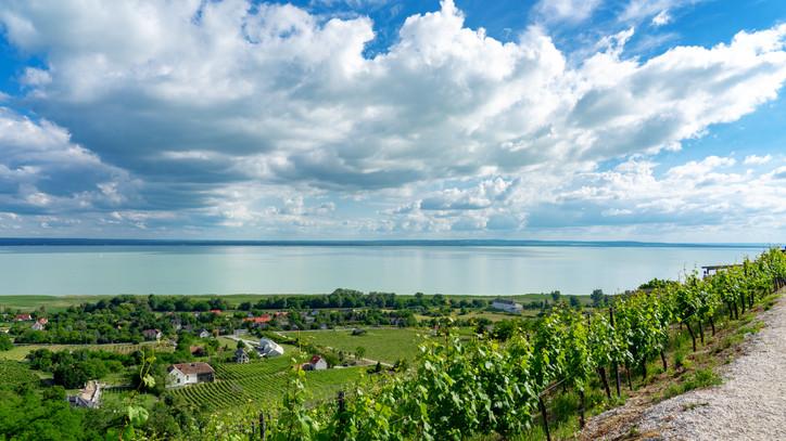 Ilyet sem lát sűrűn egy magyar horgász: halfarkast észleltek a Balatonnál