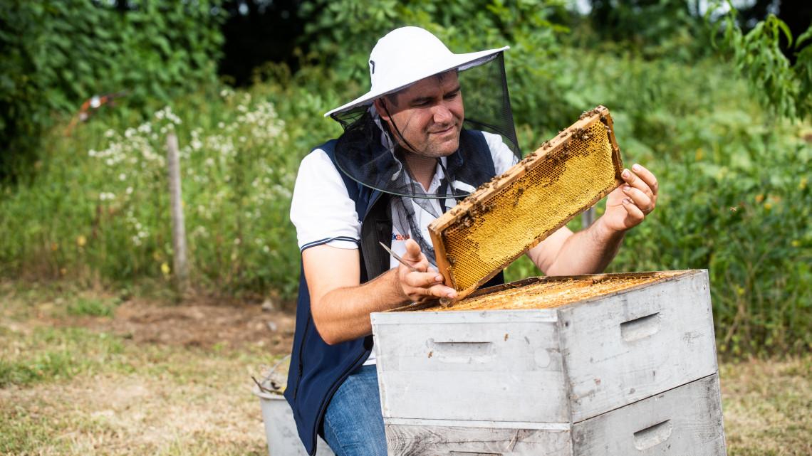 Ez a legendás Mézes Gergő titka: univerzális bizniszt épített Vizsolyban a méhekre