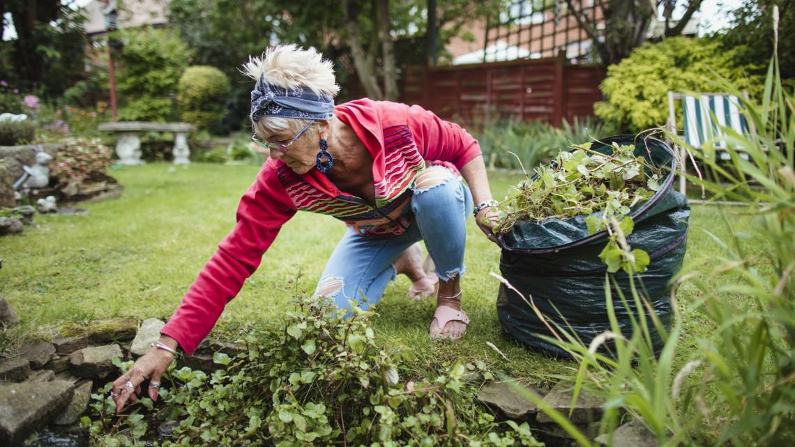 Ingyen burjánzanak a kertben: így használd fel a finom és egészséges gyomnövényeket