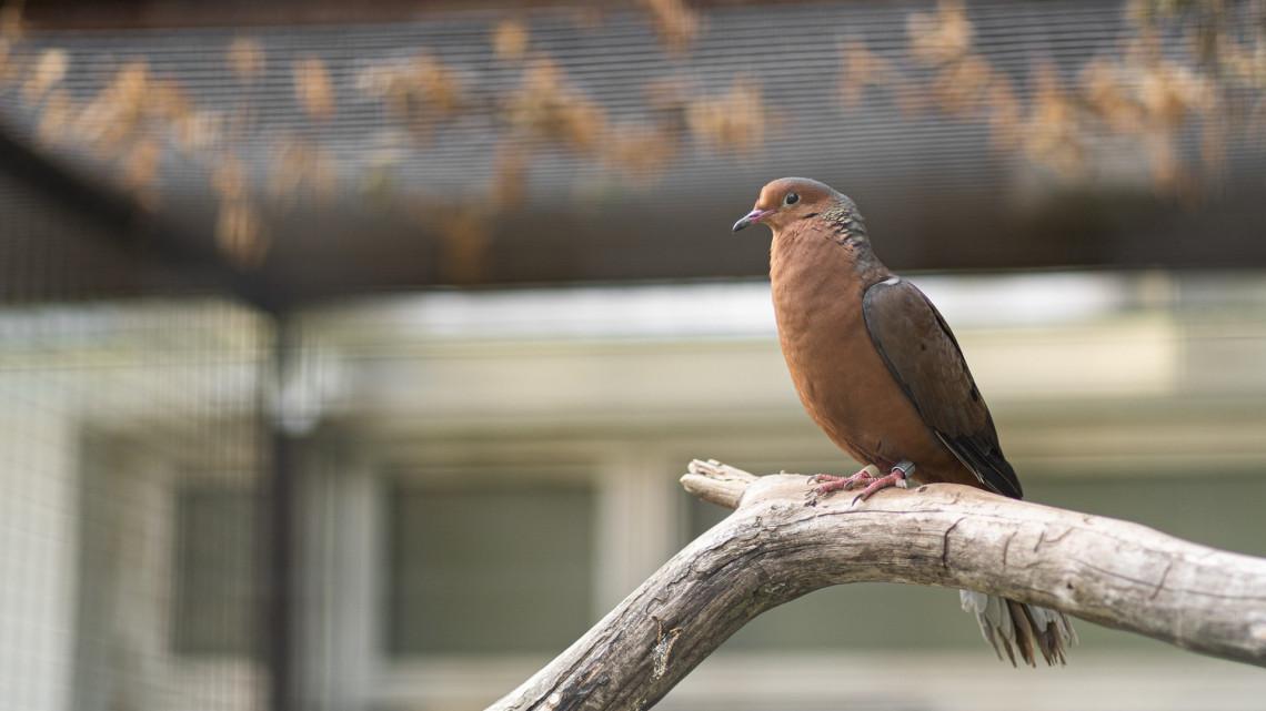Páratlan madárritkaság érkezett a vidéki állatkertbe: a vadonban már kihalt a faj
