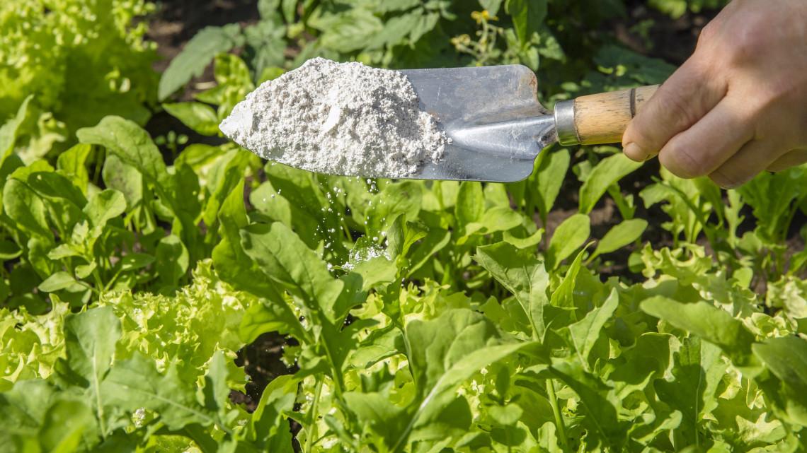 Aranyáron mérik, sok kertész igazi csodaszernek tartja: mire jó a kovaföld?