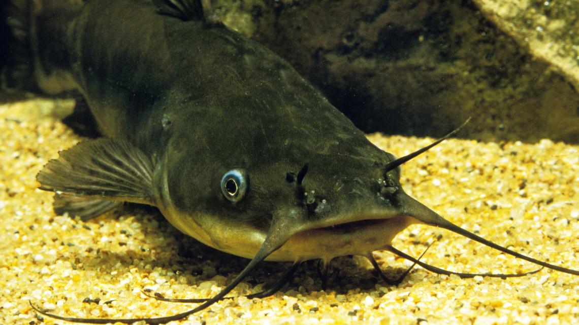 Hihetetlen mázlijuk volt: két kapitális halszörnyet is kifogtak ugyanabból a vízből