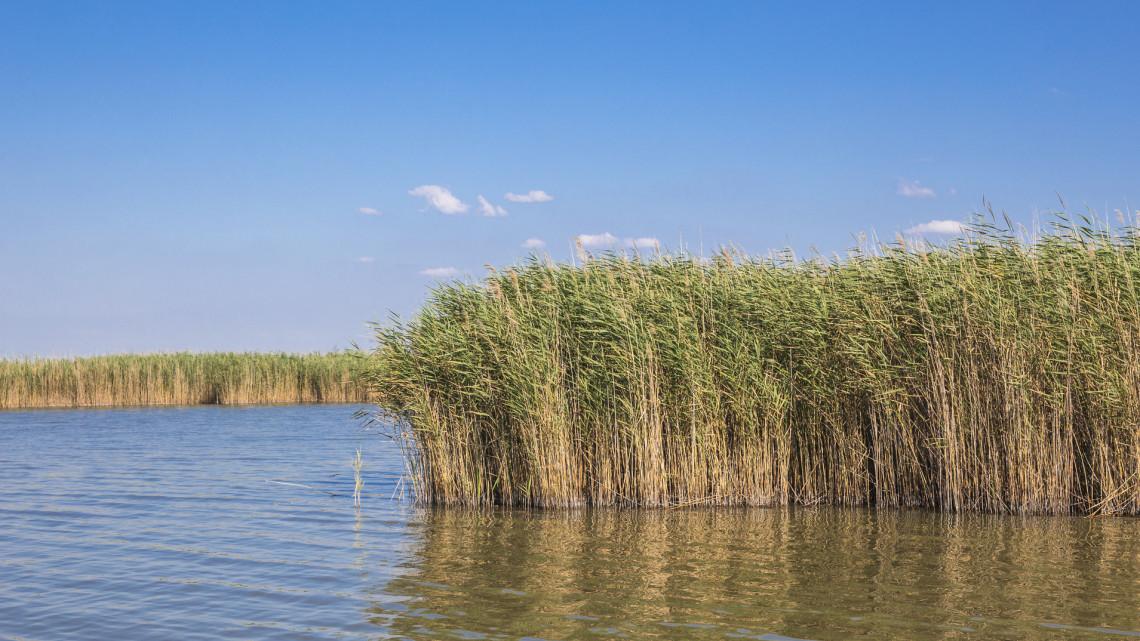 Mi a kőkemény igazság: pusztulóban a Velencei-tó, vagy csak túlreagáljuk a bajt?