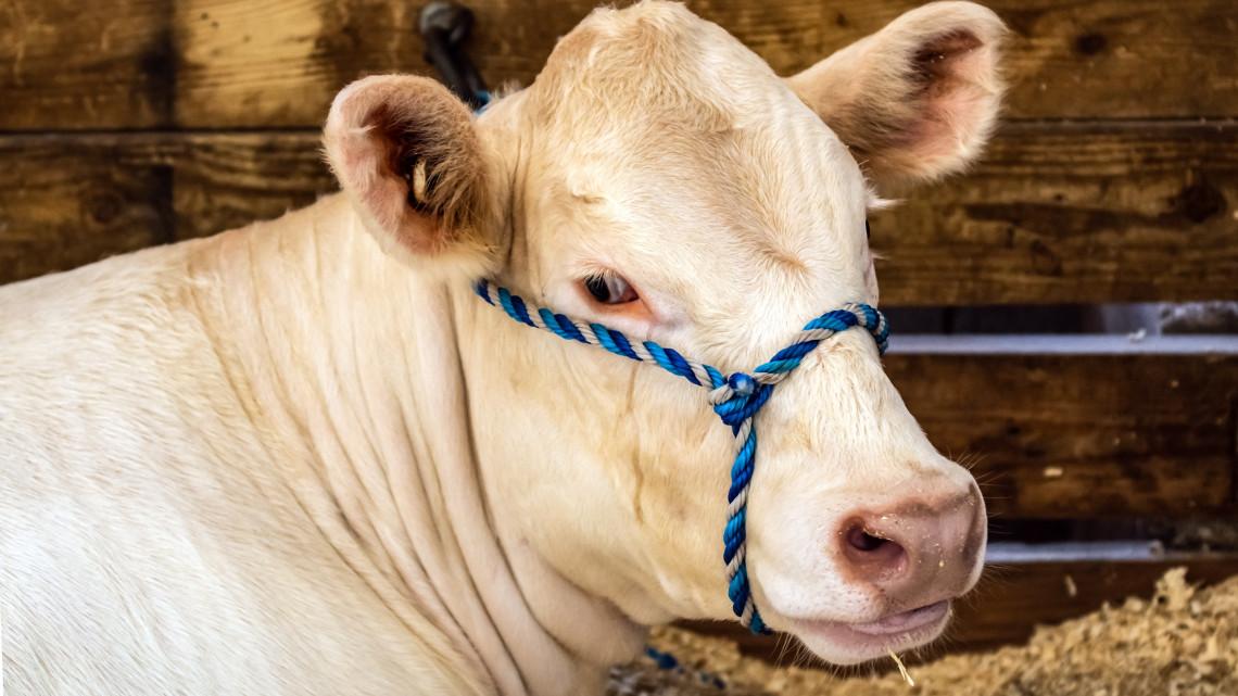 Van mit nézni a jubileumi rendezvényen: megnyílt az országos  Farmer Expó