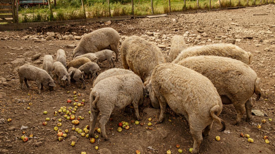 Durva áremelkedés a henteseknél: már csak a gazdagok ehetnek ebből a húsféléből