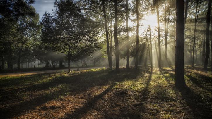 Szörnyű tragédia: holtan találtak rá egy túrázóra a Zemplénben
