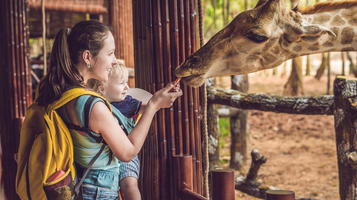 Ezeken a helyeken felejthetetlen élmények várnak: íme a legjobb vidéki állatkertek