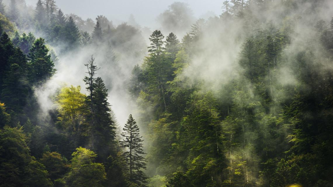 Súlyos katasztrófa fenyeget: a fák harmada örökre eltűnhet, ez a véget jelentheti