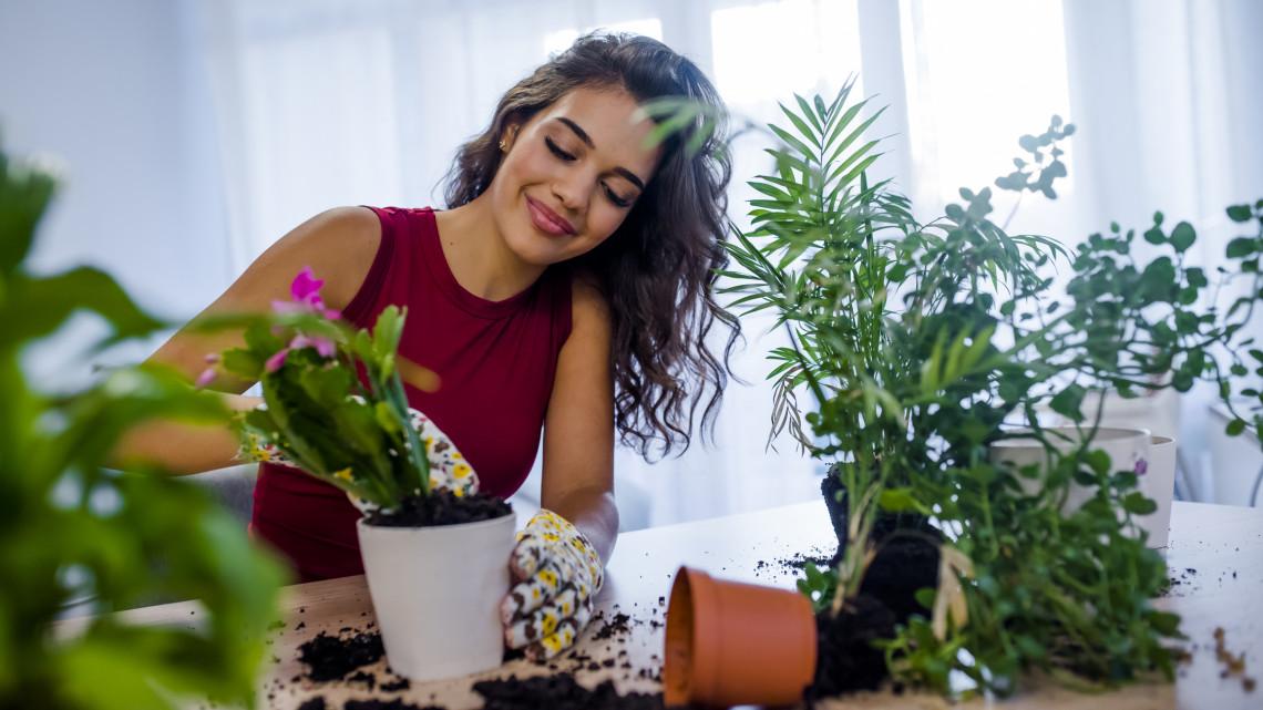 Igazi zimankóval tört be az ősz: ezeket a növényeket azonnal vidd be a lakásba!