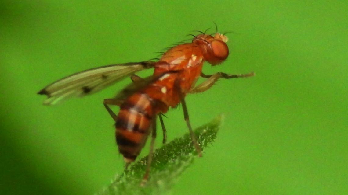 Apró, de annál pusztítóbb rovar jelent meg: mi lesz így a magyar terméssel?