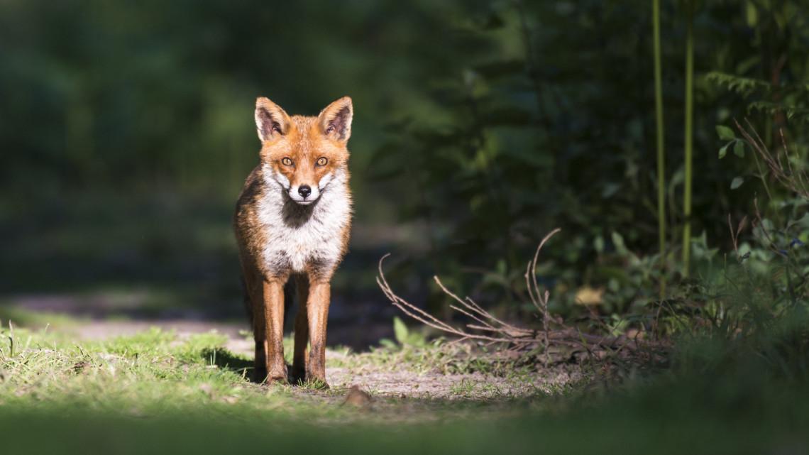 Állati videó: durva, mennyire mozgalmas az élet a magyar erdőkben