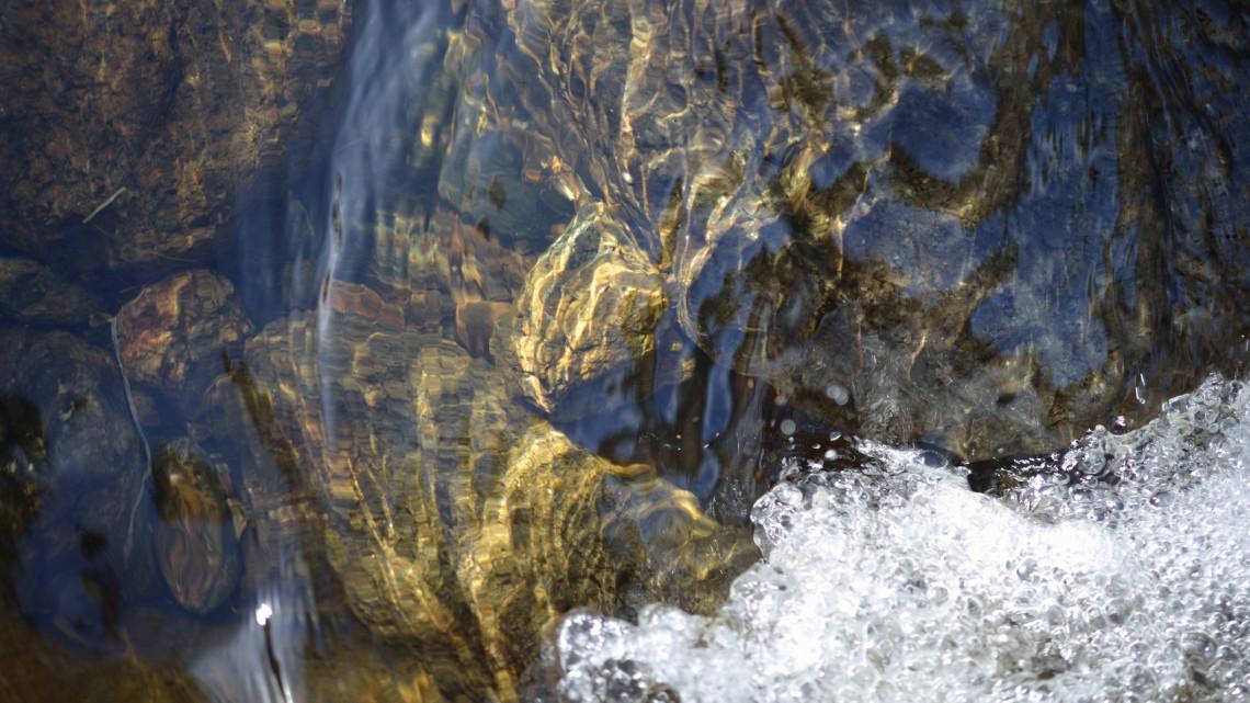 Pihenő halaknak nézték: de valami egészen mást találtak a bakonybéli patakban
