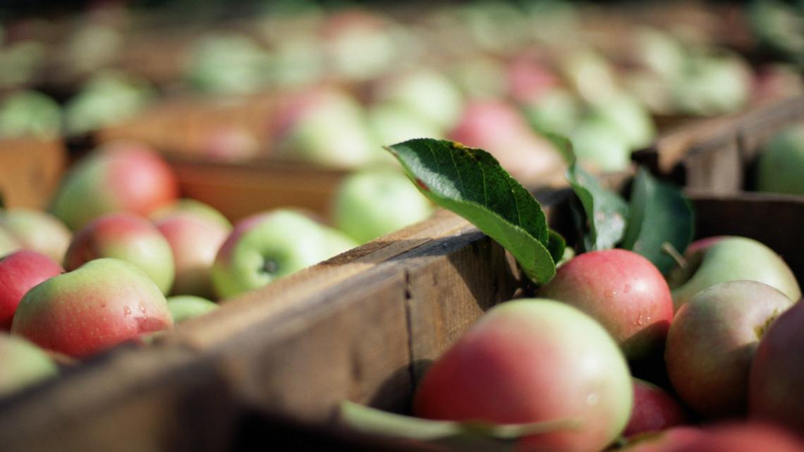 Milliárdos támogatást is kaphatnak: élelmiszeripari üzem épülhetne belőle