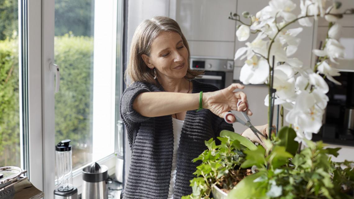 Ez a luxusnövény fogy a legjobban: 8 trükk, hogy életben tartsd a virágok királynőjét