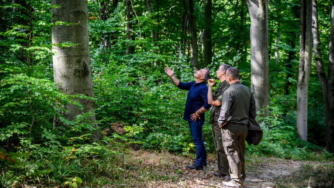 Ezért kiránduljunk az őszi erdőkbe: egyre fontosabbak ezek a zöld óriások