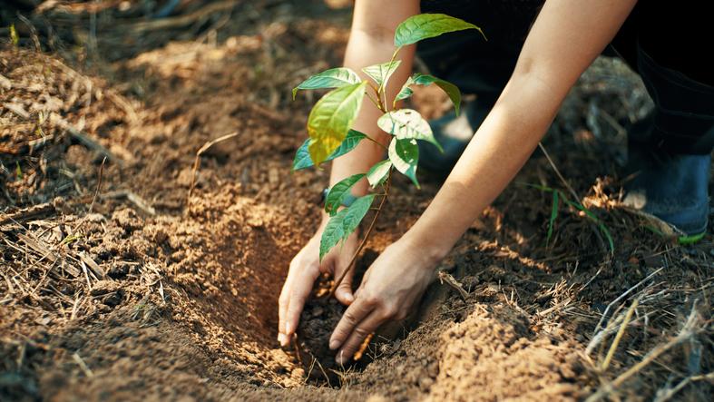 Folytatódik a településfásítás: elkezdődött a program őszi ültetési szezonja