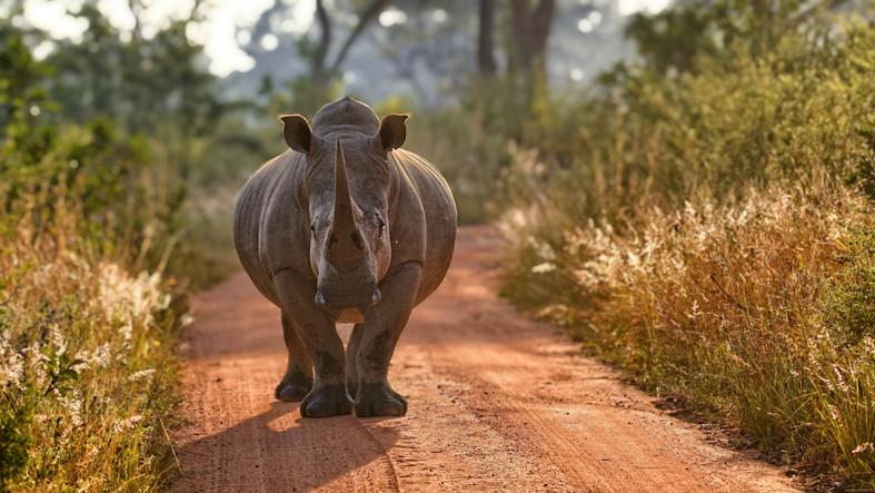 Különleges lakóval bővült a Nyíregyházi Állatpark: fotón az új jövevény