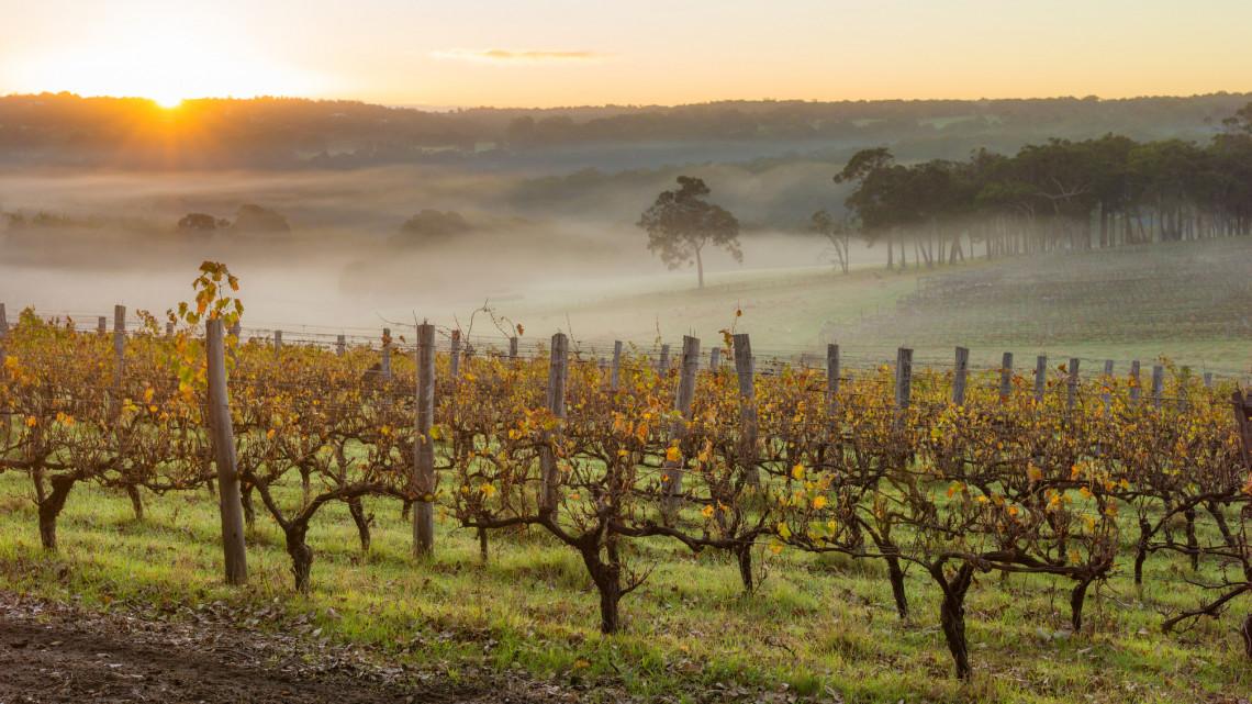 Jól jött az augusztusi csapadék: ilyen bortermést jósol az év bortermelője