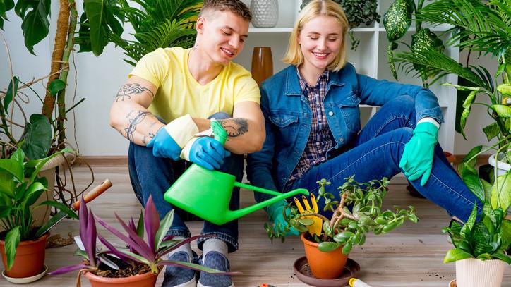 Szobanövényt vásárolnál? Ezekre a buktatókra érdemes figyelni