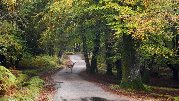 Óvatosságra intik a kirándulókat: ebben az időszakban tilos mászkálni a nógrádi erdőkben