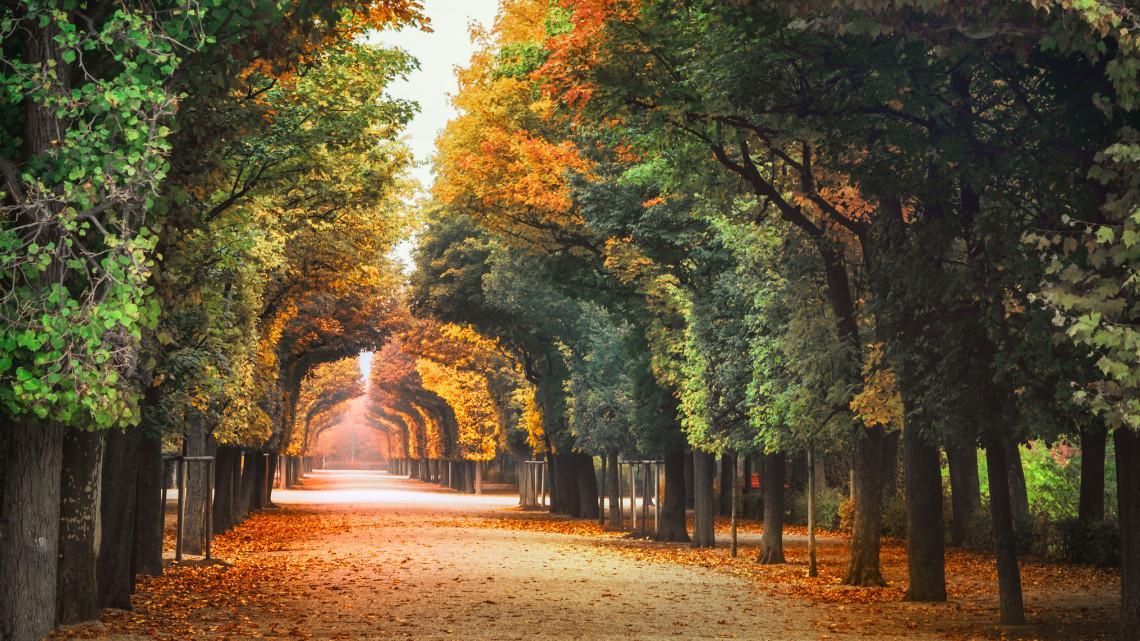 Álomesküvők helyszíne: minden, amit az Alcsúti Arborétumról tudni lehet