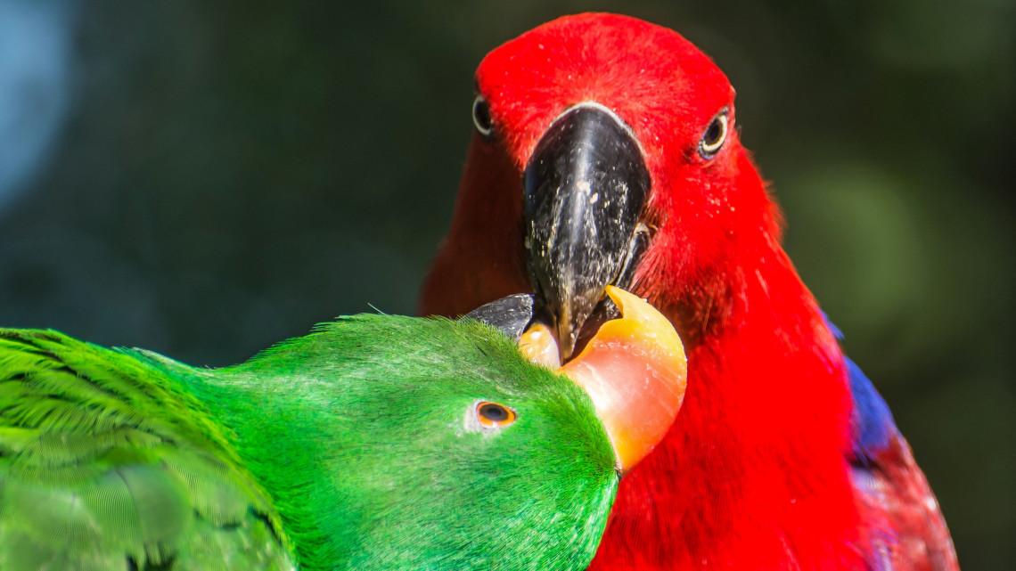 Ledobták a cukiságbombát: egzotikus párral bővült a vidéki állatkert