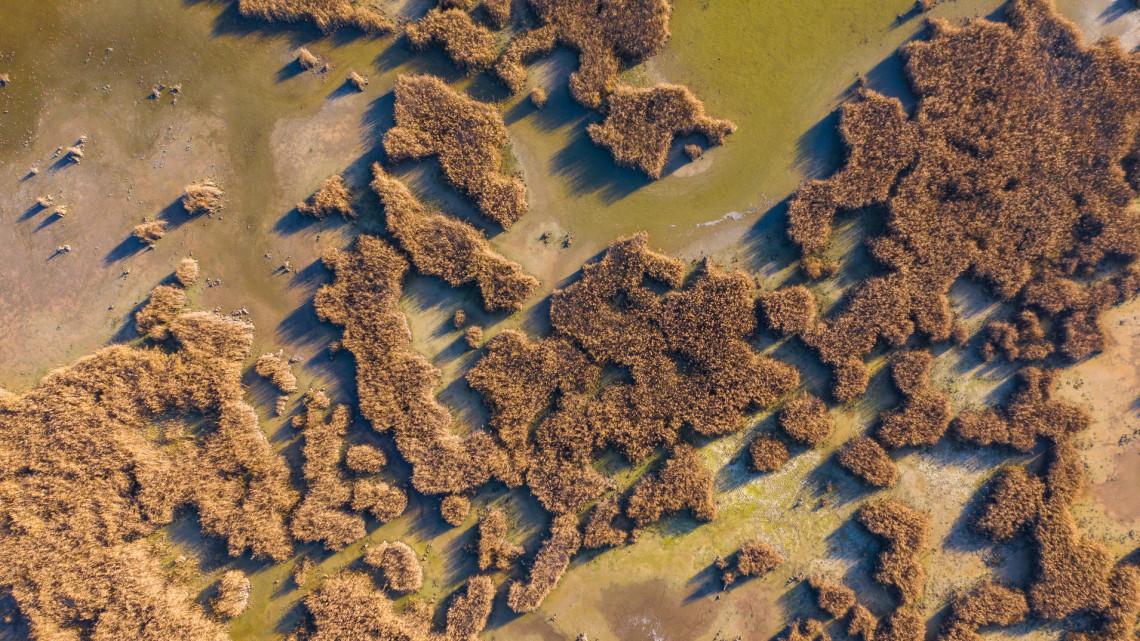A tömeges halpusztulás csak a kezdet volt: már csak a csoda segíthet a tavon?