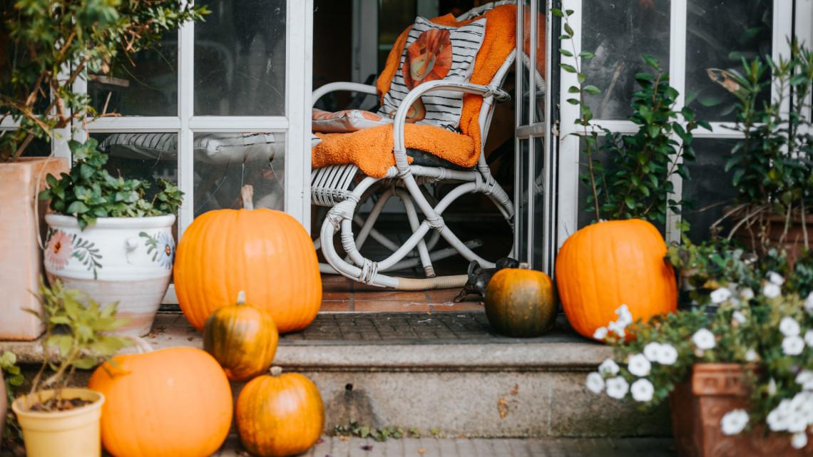 Borsos áron kínálják az őszi díszzöldségét: ebből faragják a rémisztő töklámpást